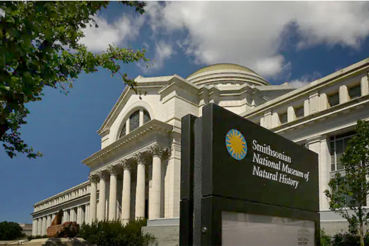 Smithsonian Natural History Museum to reopen June 18