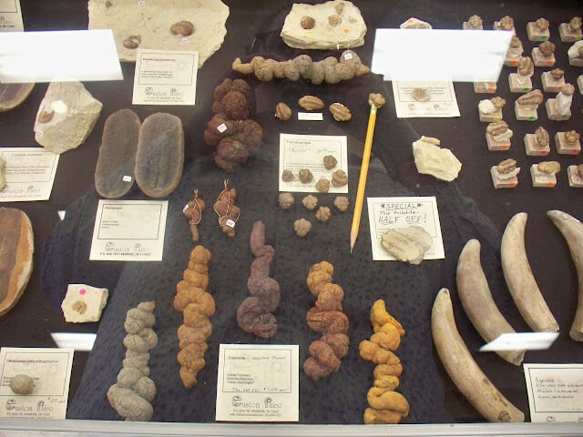 With over 300 vendors you will find a little bit of everything at the HTCC - but this is one of three locations for the Arizona Mineral & Fossil show - also in the Fossil Room, the amazing collection of Dino Poop (Coprolite) from Custom Paleo.