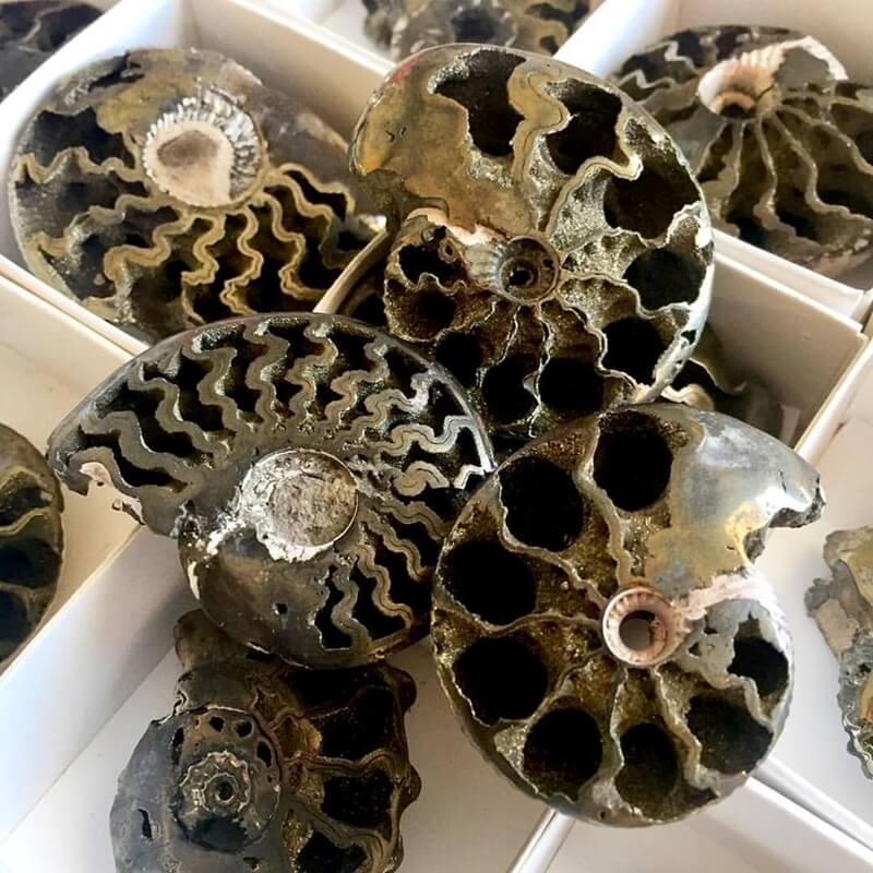Pyritized Ammonites from Enter The Earth at the G&LW Show