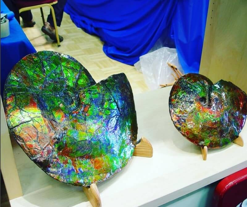 Rainbow Ammonite Fossils