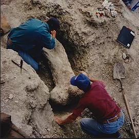 Japheth Boyce Fossils Image