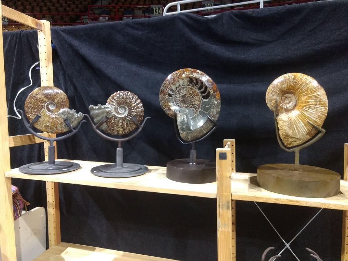 Various Ammonites